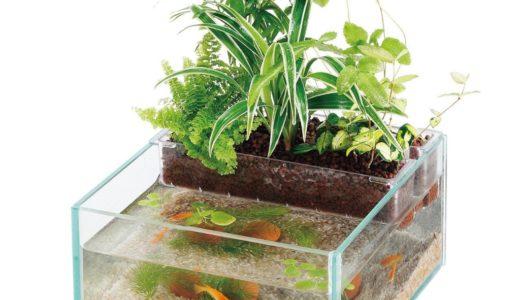 アクアリウム+水耕栽培の一体型水槽7選!魚と植物を一緒に育てよう!
